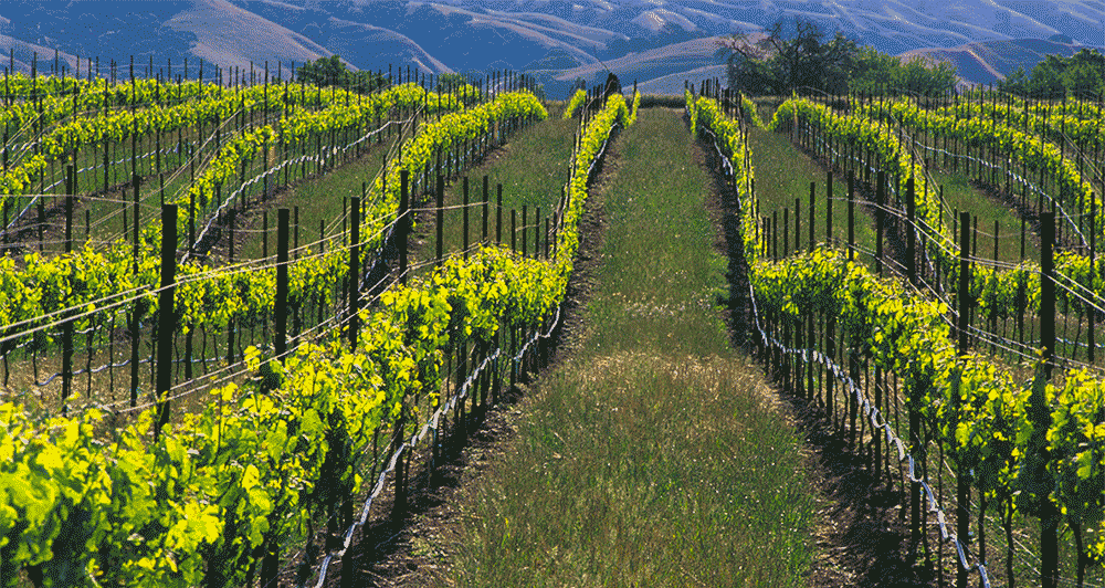 The Heritage of Tri-Valley California Wine