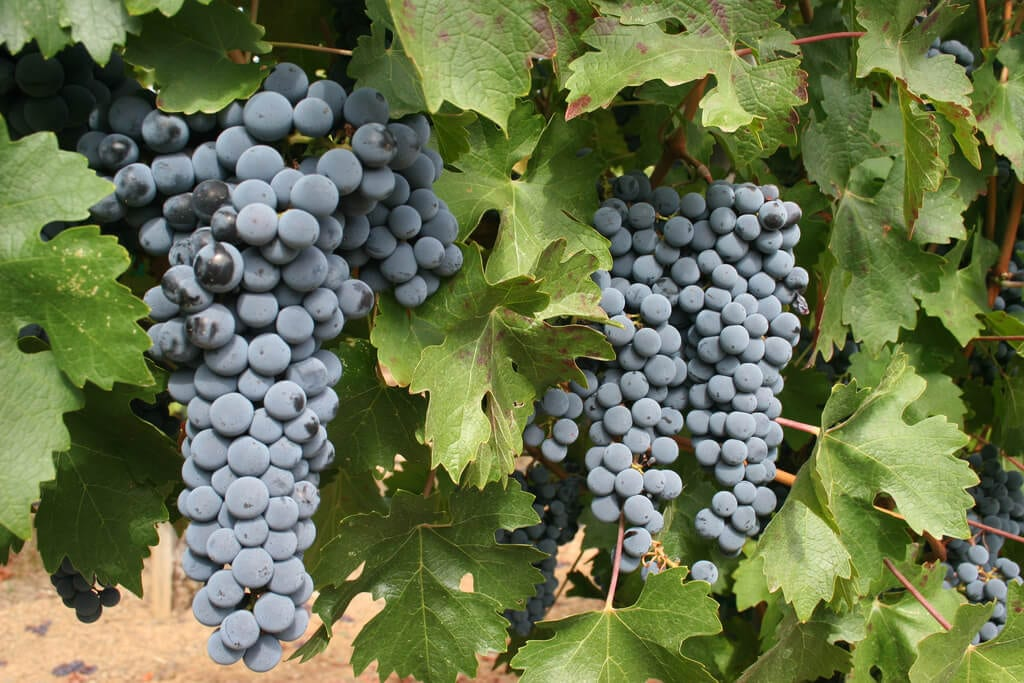 Celebrate International Cabernet Day August 27