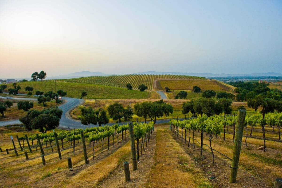 Take Flight! 5 Wines Not to Miss During Harvest