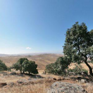 Brushy Peak Regional Preserve