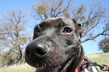 Sadie at Del Valle Park
