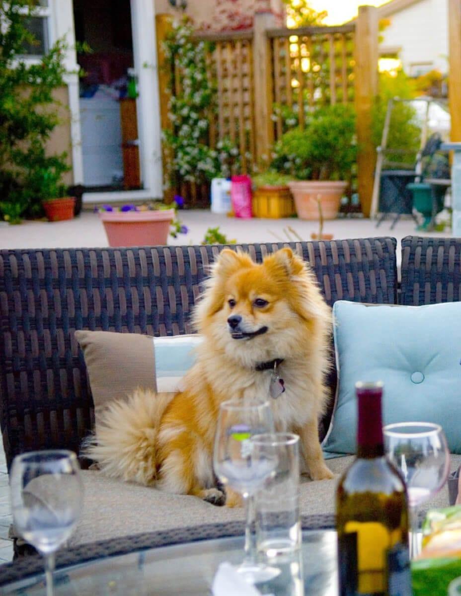 Livermore Wine Dog