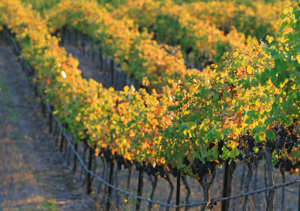 Livermore Valley: California Wine Country That Won't Break the Bank