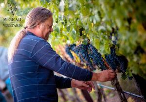 winemakermarkinvineyard