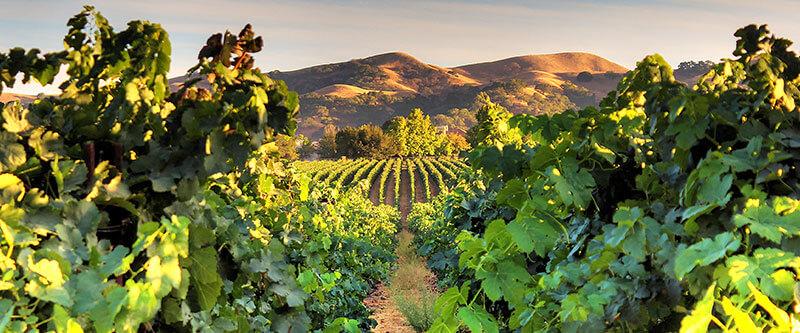 wente-vineyards