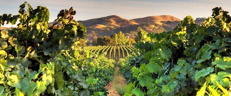 Wente Vineyards Visit Tri Valley