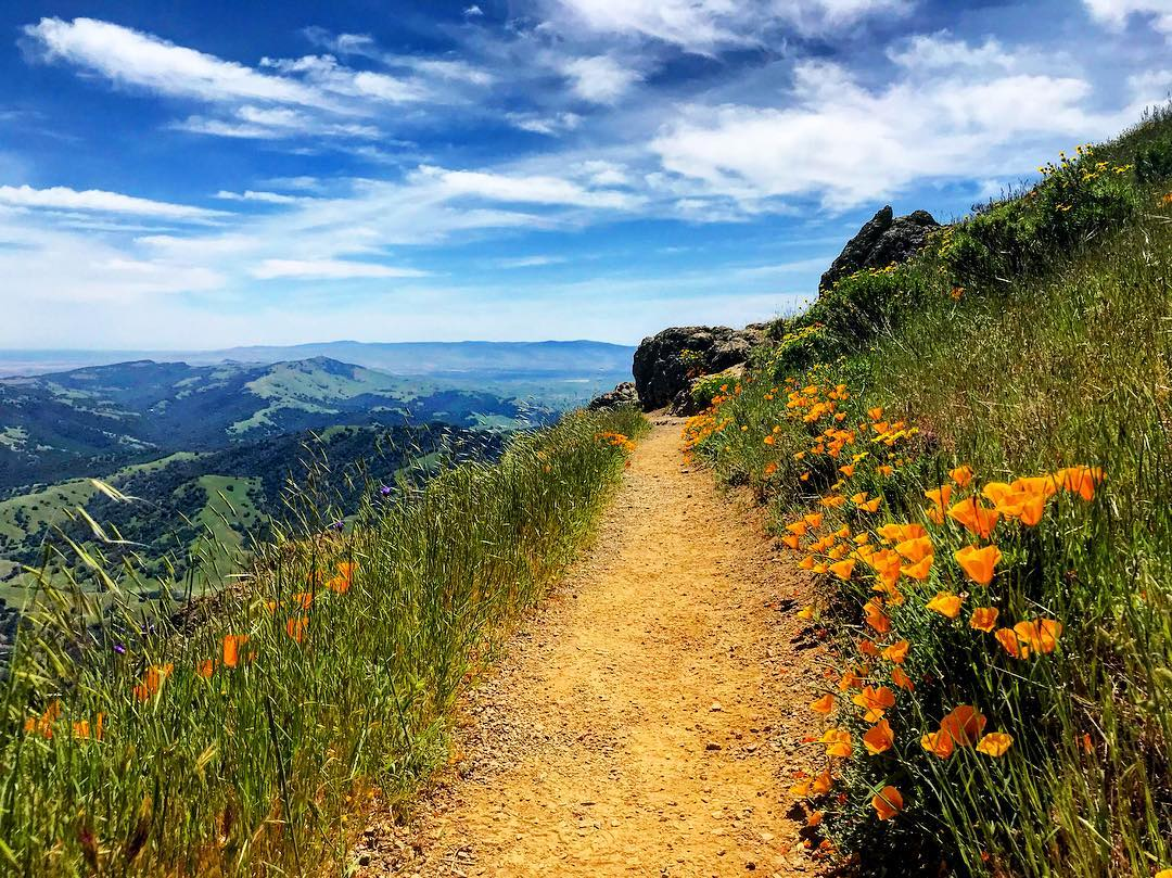 Super Bloom Poppies Mt. Diablo