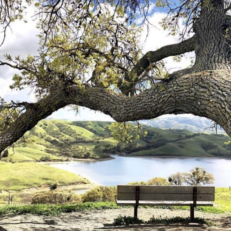 A perfectly positioned bench overlooking the lake on East Shore Trail. Del Valle Regional Park, Livermore, CA