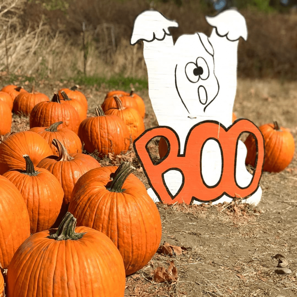 pumpkin patch with ghost decor
