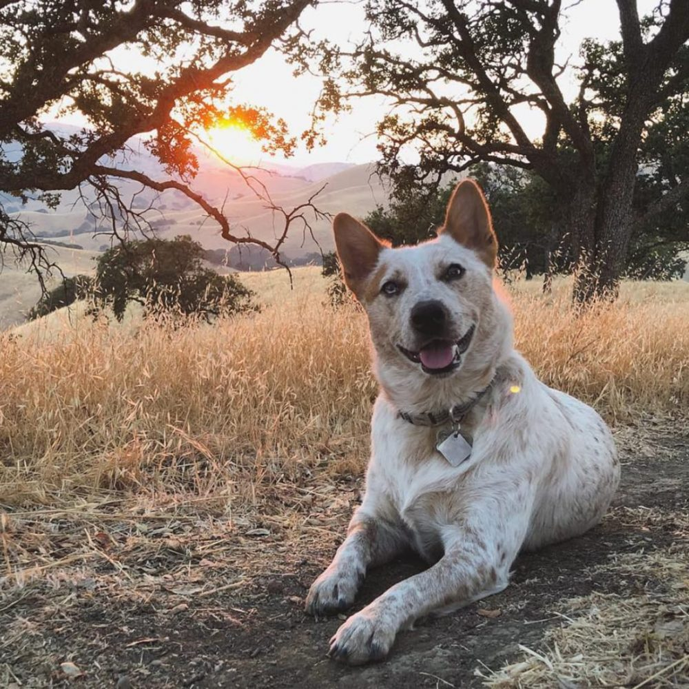 Dog lying down on a trail with sunset in the background
